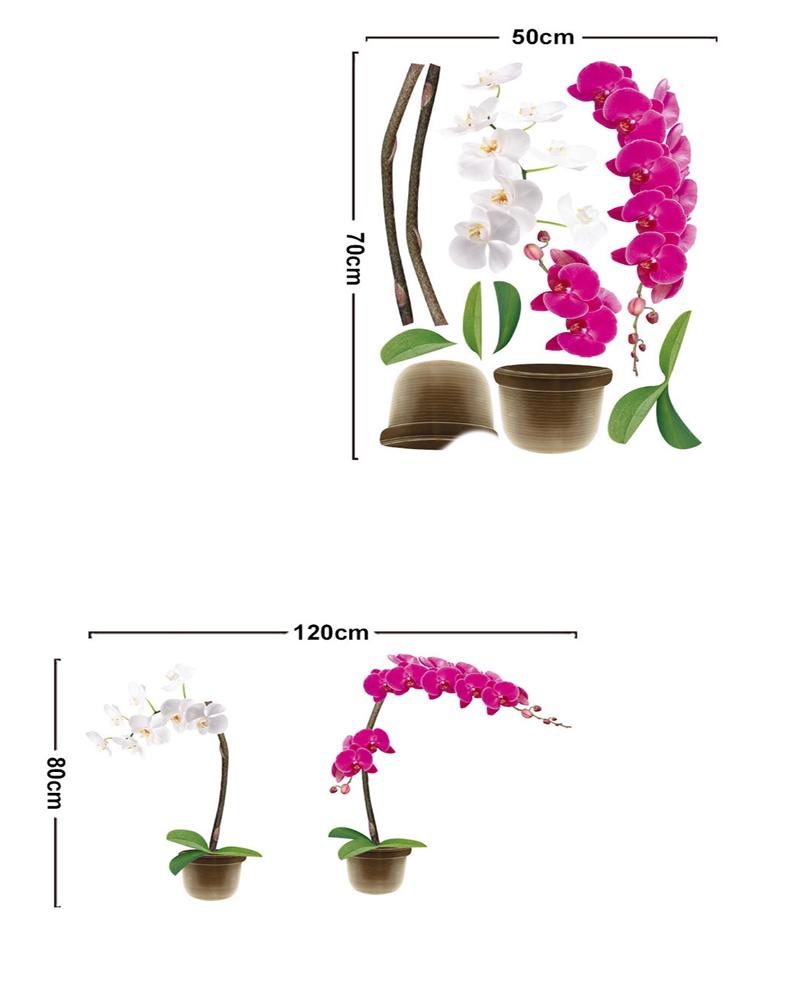 цветы которые не вызывают аллергию